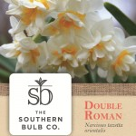 Southern Bulb Company Plant Tag*http://www.duoparadigms.com/wp-content/uploads/2012/10/southern_bulb_tag1.jpg